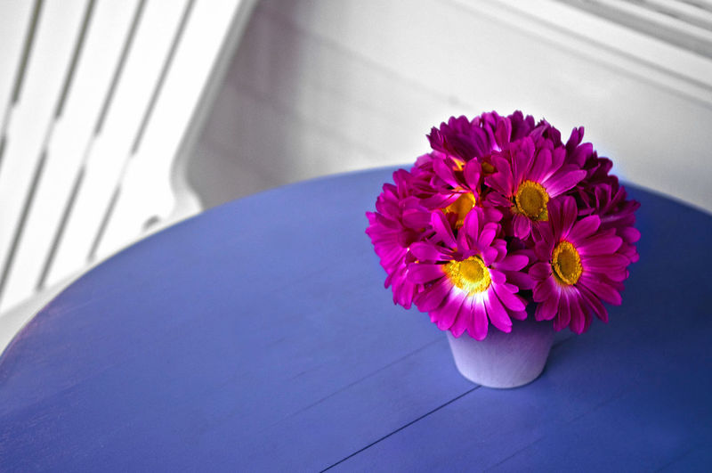 Magenta flower pot on table at home