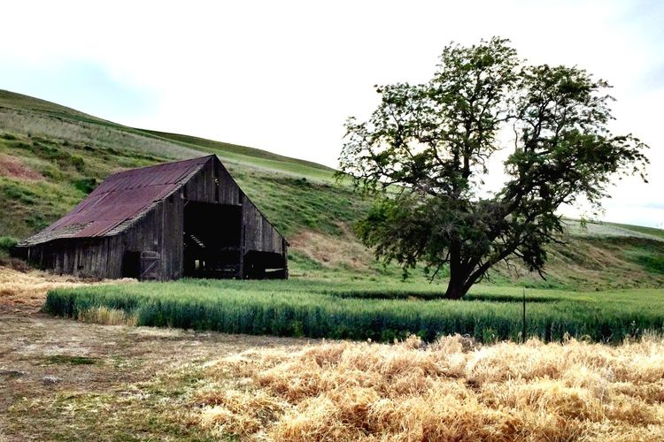 Eastern Washington farmland Barnyard Memories Yesterday's Gone Home Is Where The Art Is Home Sweet Home Hard Times