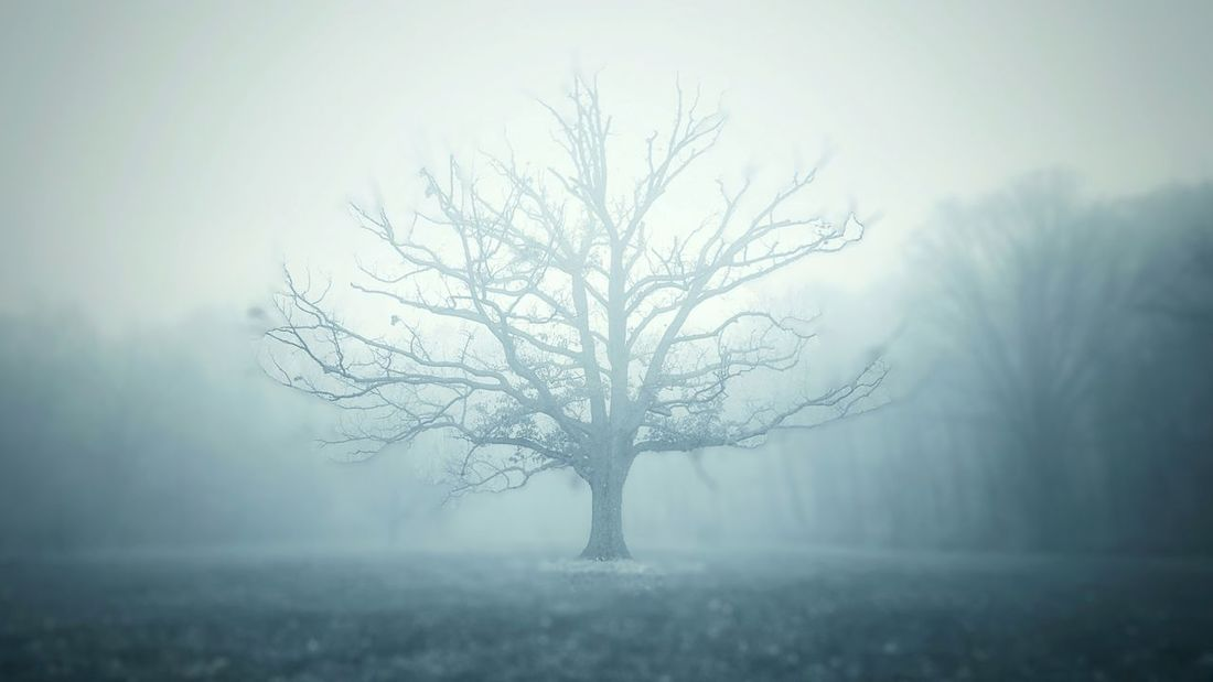 in a fog Tree Bare Tree Nature Beauty In Nature Fog Landscape Winter Cold Temperature Tranquil Scene Galaxy S6 Nature Photography EyeEm Best Shots EyeEm Best Shots EyeEm Best Shots - Nature EyeEm Nature Lover Trees Forest Woods No People Zen Blue Mist Misty Morning