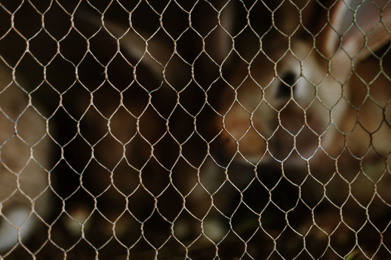 Backgrounds Background Cage Caged Caged Animals Rabbit Rabbit - Animal Chain Security Protection Safety Fence Barrier Metal Pattern Boundary Chainlink Fence No People Focus On Foreground Close-up Day Full Frame Outdoors Nature Selective Focus Pattern, Texture, Shape And Form