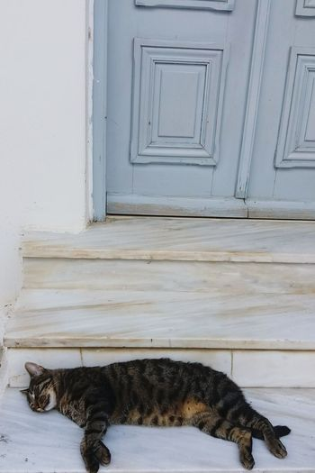 Home Is Where The Art Is Paros_island Enjoying Life Summer Greece Relaxing Photography Nature Photography Hanging Out Check This Out Nature_collection Nature Fun Cat Animals