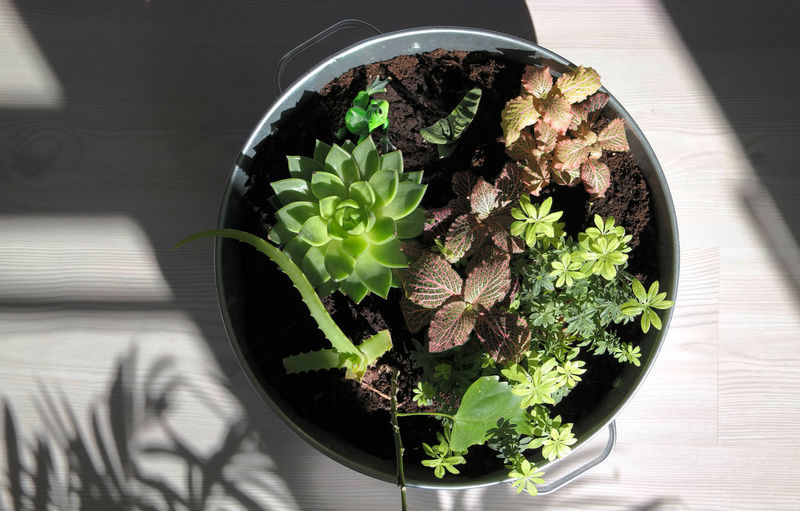 Bowl Directly Above Flower Pot Food Food And Drink Freshness Green Color Growth Growyourown Healthy Eating Herb High Angle View Houseplant Indoors  Leaf Nature No People Plant Plant Part Potted Plant Table Vegetable Wellbeing