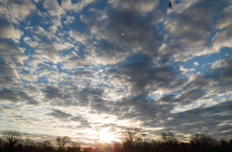 Morning Sunrise [03.16.2017] Sky Cloud - Sky Nature Beauty In Nature Scenics Cloudscape Sunset Idyllic Dramatic Sky Tranquility Low Angle View Astronomy Outdoors No People Star - Space Tree Galaxy Milky Way Day EyeEmNewHere