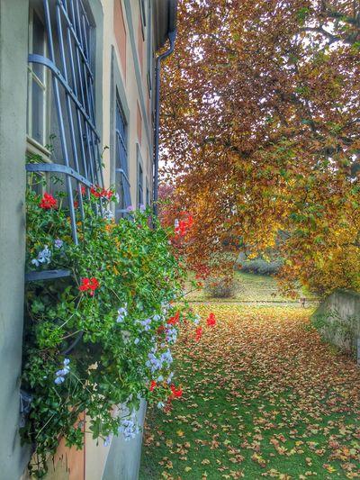 Taking Photos Colors Autumn Autumn Colors Walking Around Beautiful Window Nature