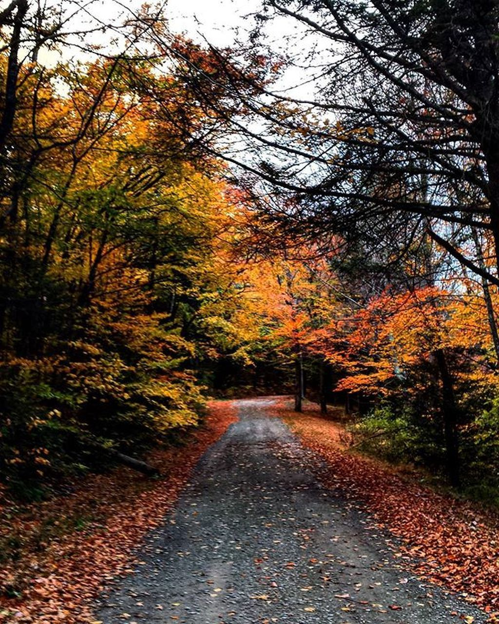 autumn, change, tree, leaf, the way forward, nature, tranquility, scenics, tranquil scene, beauty in nature, orange color, outdoors, no people, day, forest, road, landscape, sky