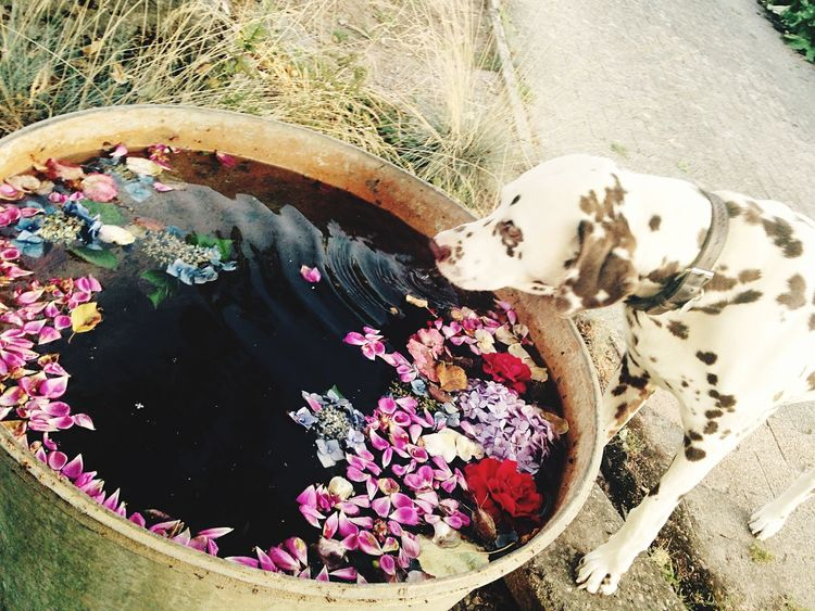 Wolkesieben 💭7⃣ Bestdog  ❤️ Flowers 🌸