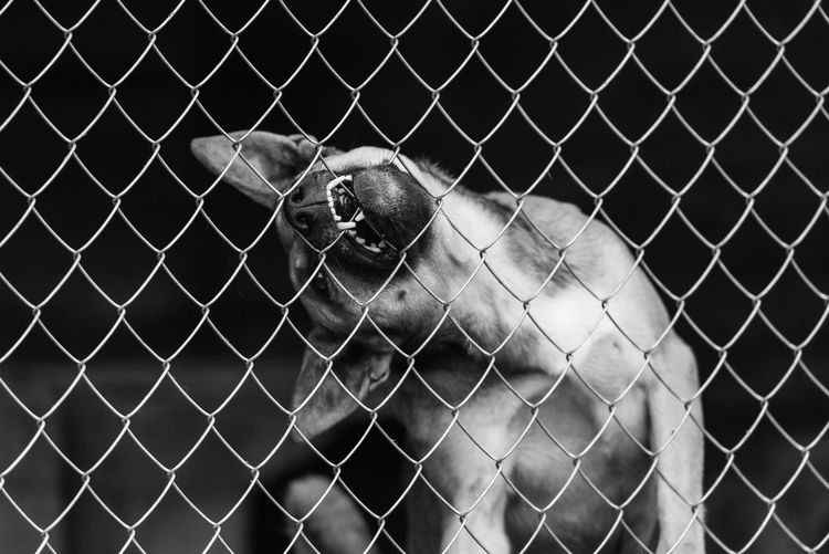 View of chainlink fence in cage at zoo