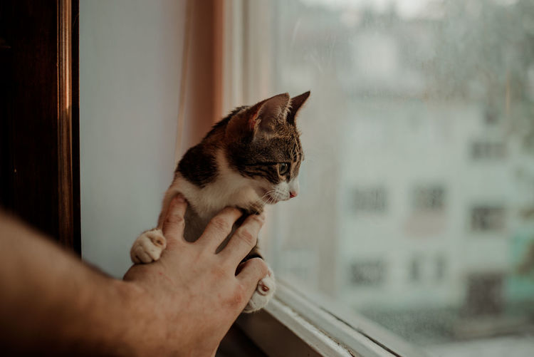 Cropped hand holding cat by window at home