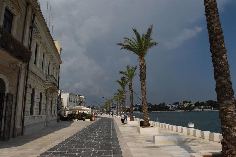 Adria Adriatic Sea Apulien Apúlia Brindisi Italia Italien Italy Italy❤️ Palm Tree Palmen