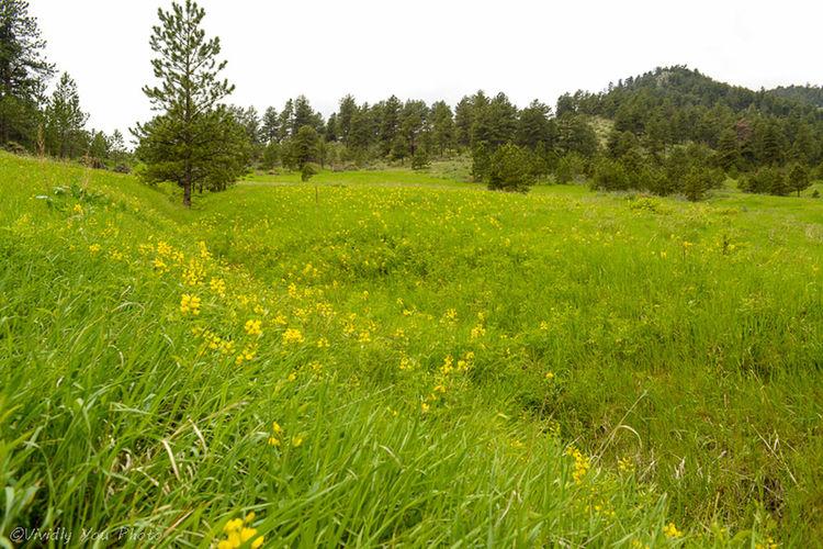 Wild Flowers Taking Photos Nature Landscape