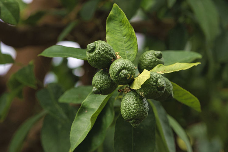 Close-up of fruit on plant