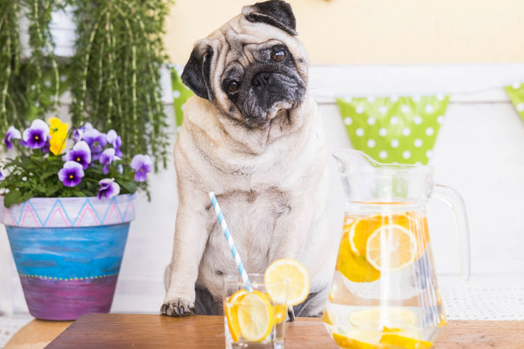 Portrait of dog sitting by table at home