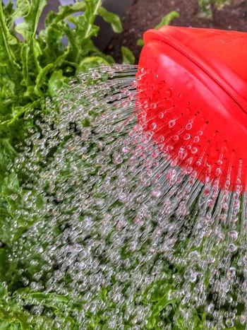 Drops Freshness Garden Gieskanne Giessen Nature Outdoors Spritzen Tropfen Wasser Water Wet