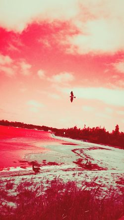 Sunset Flying Landscape Outdoors Nature Sky Beauty In Nature Day Lake Water Sea Australia Lakesentrancevictoria Australianphotographer Postcard Vacations Mobilephone Photography Australian Photographers Tranquility Nature Bird Red Through My Lens Flyingbird