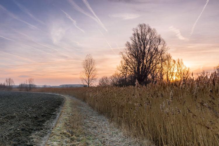 Sunrise from a field at the Bolderweg, Biervliet Tranquil Scene Sunrise Vapor Trail Scenics - Nature Cloud - Sky Cane Sony A77ii Zeeuws Vlaanderen Zeeland  The Netherlands