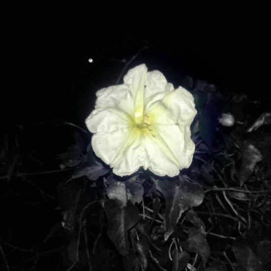 Flor solitaria. Art Edicion Picsart Instapic