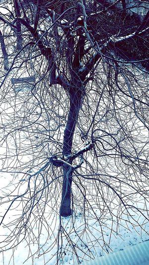 EyeEm Best Shots Tree Secretly Followme Followback Do You Like ıt?