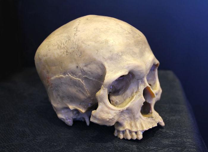 weathered human skull on dark background. Skull Weathered Bone  Human Skeleton Anatomy History Body Part Skeleton Single Object Biology Dead Death Decay Halloween Horror Scary Science