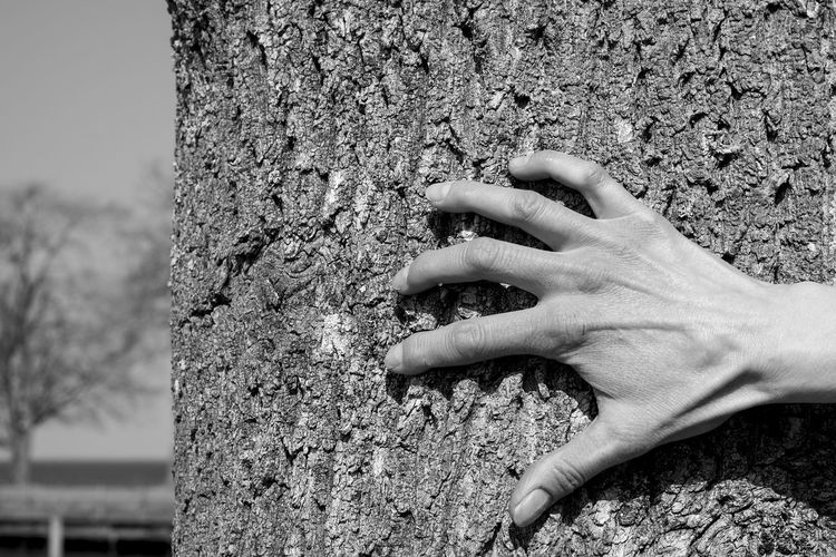 hand and cortex