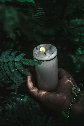 Close-up of hand holding candle by plant