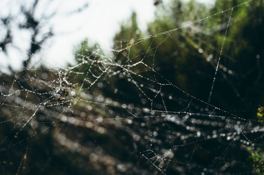 Beauty In Nature Close-up Cob Web Complexity Connection Day Dew Drop Focus On Foreground Fragility Full Frame Intricacy Natural Pattern Nature No People Non-urban Scene Outdoors Plant Spider Web Spiderweb Spiderweb In Morning Dew Trapped Water Wet