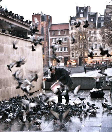 capturing motion Architecture Outdoors City Day Pigeons Everywhere Pigeons ATTACK Paris People Photography Street Photography Welcome To Black Focus On The Story