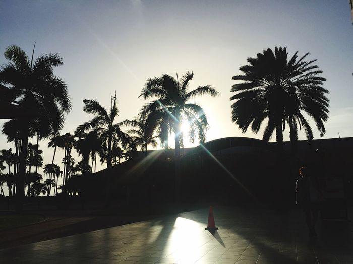 Island life is good life Aruba Palmtree Palms Island EyeEm Nature Lover Eyemphotography Eye4photography