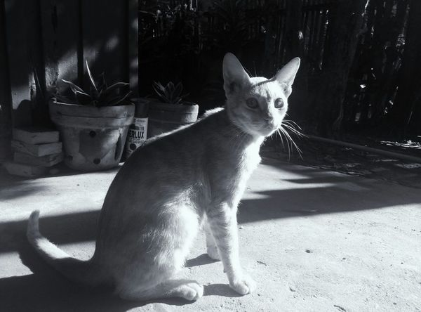 Cat Learn & Shoot: Simplicity Creative Light And Shadow Light And Shadow Cat Lovers Vscocam Eyeem Philippines Black And White Black And White Photography EyeEm Best Shots - Black + White