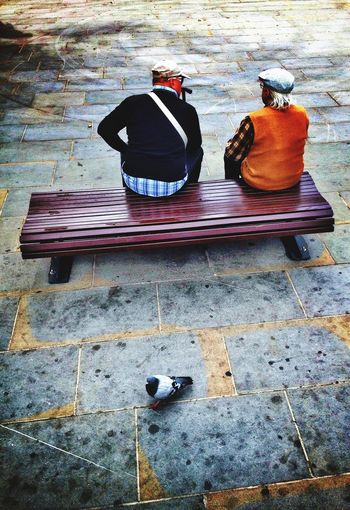 IPhoneography Streetphotography Relaxing Peace And Quiet Fmorning Meeting Bench Pigeon