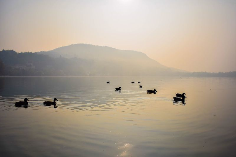 Ducks At The Lake. Duck Water Lake Mountain Lake View Duck Ducks Ducks At The Lake Lakeview Autumn Morning Silence Nofilter EyeEmNewHere Be. Ready.