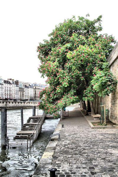 Hugging A Tree Paris Cityspaces First Eyeem Photo