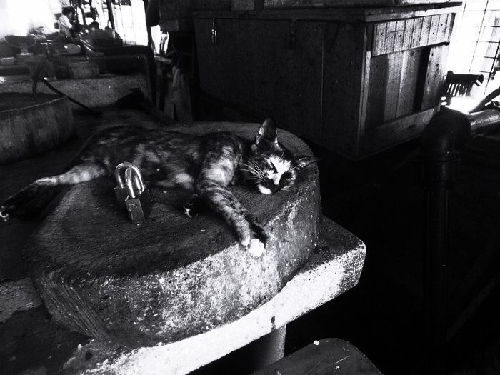 The Street Photographer - 2017 EyeEm Awards Domestic Cat Domestic Animals No People Feline Streetphotography Street Photography Black & White Photography Black And White Photography Empty Market End of market day and only a cat sleeps on a butcher's chopping board Sleeping Cat Cats Of EyeEm Visual Creativity