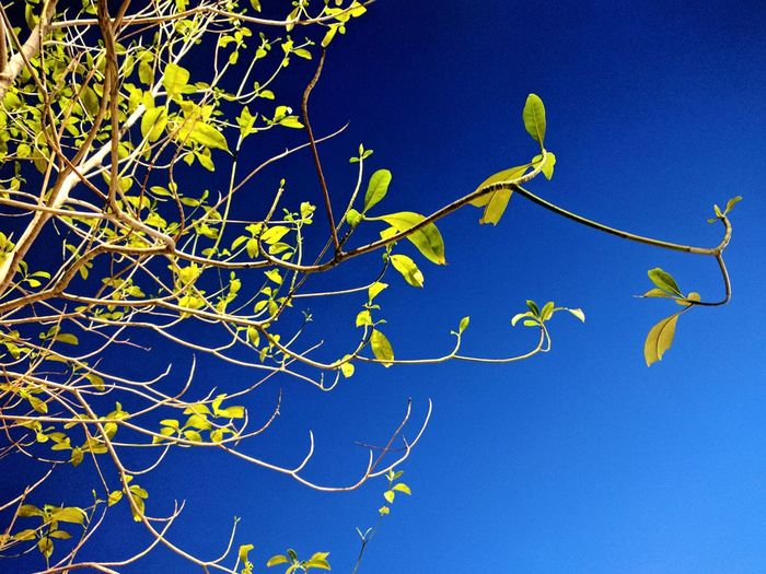 Leaves Leaves And Sky Leaves Green Blue And Green Growth First Eyeem Photo Nature Beauty In Nature Sky Branch Blue Nature Tree Outdoors Place Of Memories Bynexus
