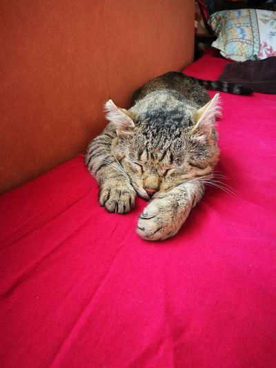 Pet Portraits Taking Photos Cats Beutiful  Sleepingcat Morning