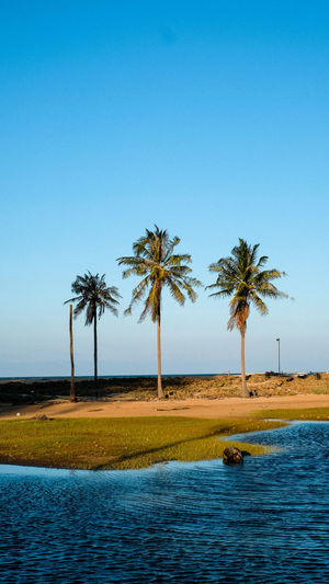 Scenic view of palm trees against clear blue sky