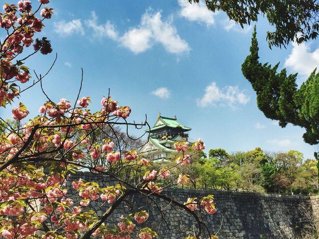 Hello World Japanese Castle Flowers Cherryblossom Nice Day Osaka 大阪 Iphonephotography Travel Photography Historical Building Nice Atmosphere Mobile Photography Niceday Landscape Ultimate Japan