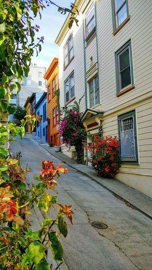 Colors buildings Flower Houses San Francisco Buildings Steap