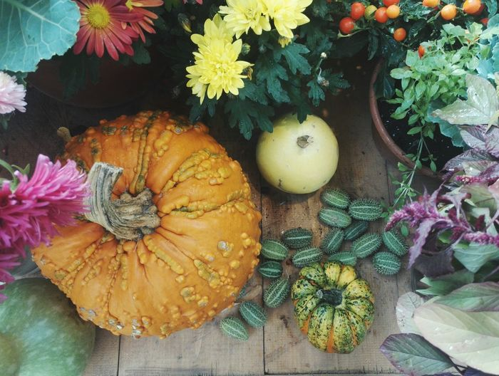 Market Backgrounds Original Colors Colorful Fruit For Sale Wood - Material Display Exhibition Garden Green Color Bright No People Sun Orange Color Flower Pumpkin Squash - Vegetable Autumn Vegetable High Angle View Close-up Plant Flower Head Pink Sunflower Fragility Stamen Cosmos Flower