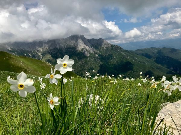 Daffodil Daffodils Beauty In Nature Flowering Plant Flower Plant Mountain Fragility Growth Vulnerability  Freshness Cloud - Sky Sky Nature White Color Tranquility Petal Tranquil Scene No People Scenics - Nature Flower Head Land
