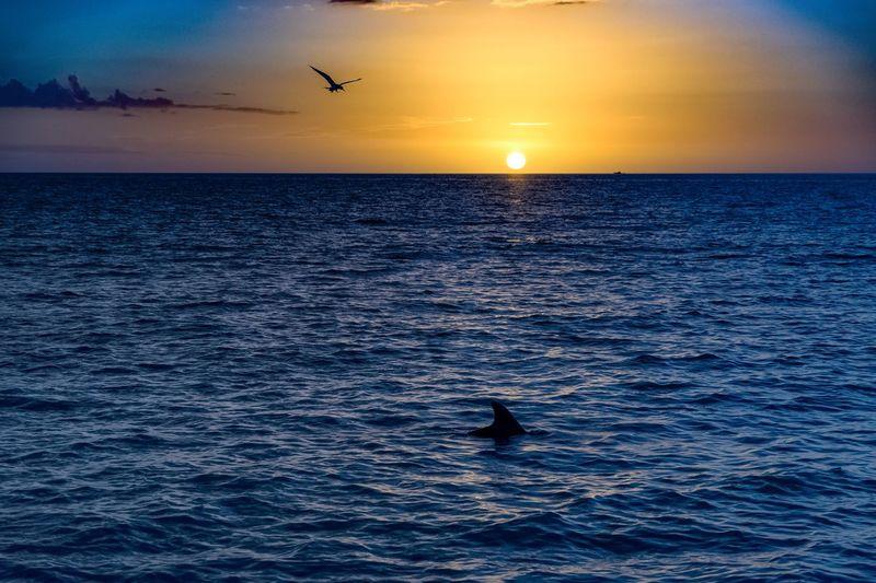 Dolphin Sea