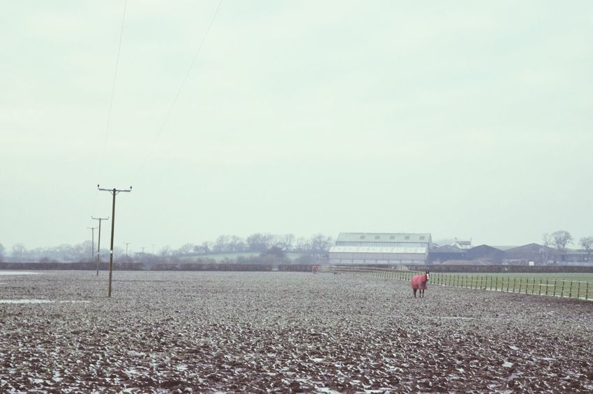 Taking Photos Outdoors Walking Around White Exploring Clouds And Sky Getting In Touch Hugging A Tree Nature_collection Eye4photography  EyeEm Gallery Showcase: January Winter Farm Life Animals Farm Nature Horse Landscape