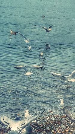 Walking Around Birds_collection Marti Hi! EyeEm EyeEm Best Shots Note3 Good Morning Deniz Seaporn