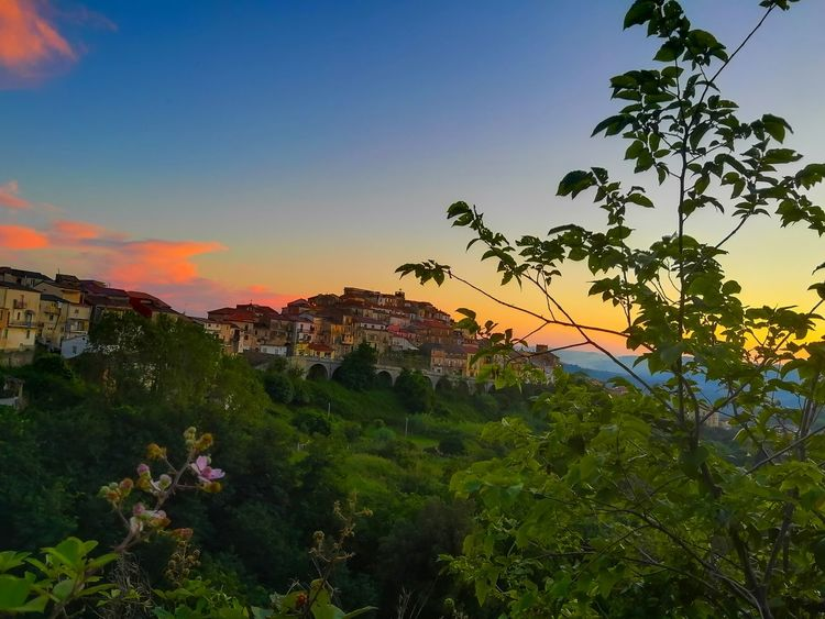 Sunset Monterosso calabro Tree Flower Flower Head Sunset Rural Scene Multi Colored Leaf Tea Crop Agriculture Summer Valley