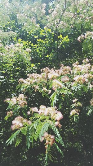 Flowers In Living Color In Bloom Trees Arbor Love Eye Em Nature Lover