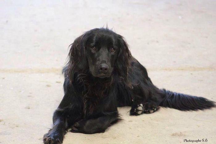 Chien Chiens Dog Dogslife Animals Animal Photography Animal