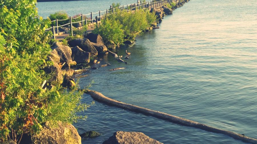 Rocks, ducks, water, pier Outdoors Nature Water Beauty In Nature Day No People Sea Tree Architecture Dead Wood Harbor Nautical Vessel Summer Sky Perspectives On Nature