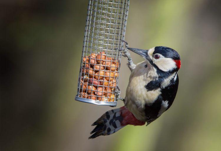 Close-up of bird perching on feeder