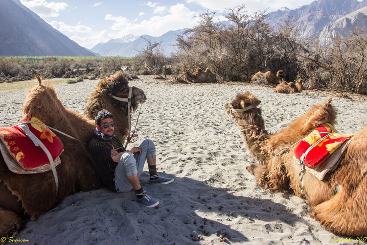 In the shadow Ladakh NOMAD NubraValley Camel Desert Double Hump Camels Mountain People Real People Sand Sky