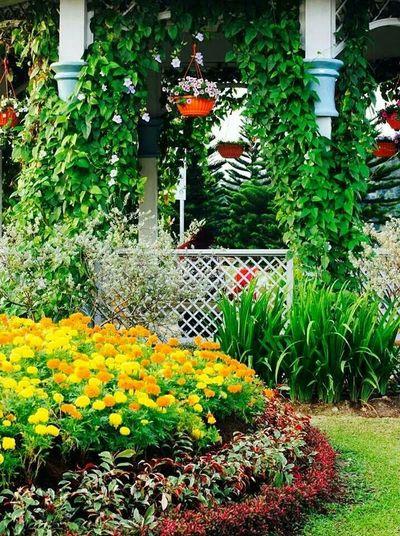 Flowery Gazebo Putrajaya,malaysia Flowers Gazebo Taman Saujana Hijau