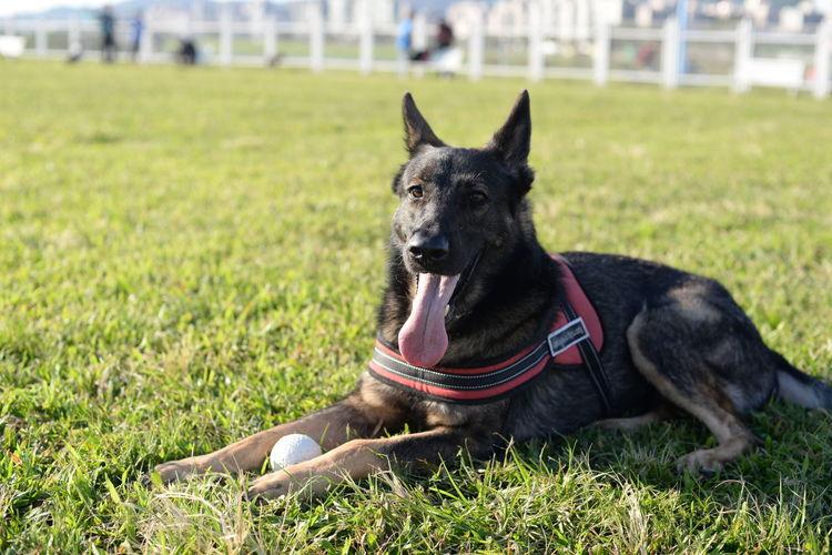 Close-Up Portrait Of Dog On Grass